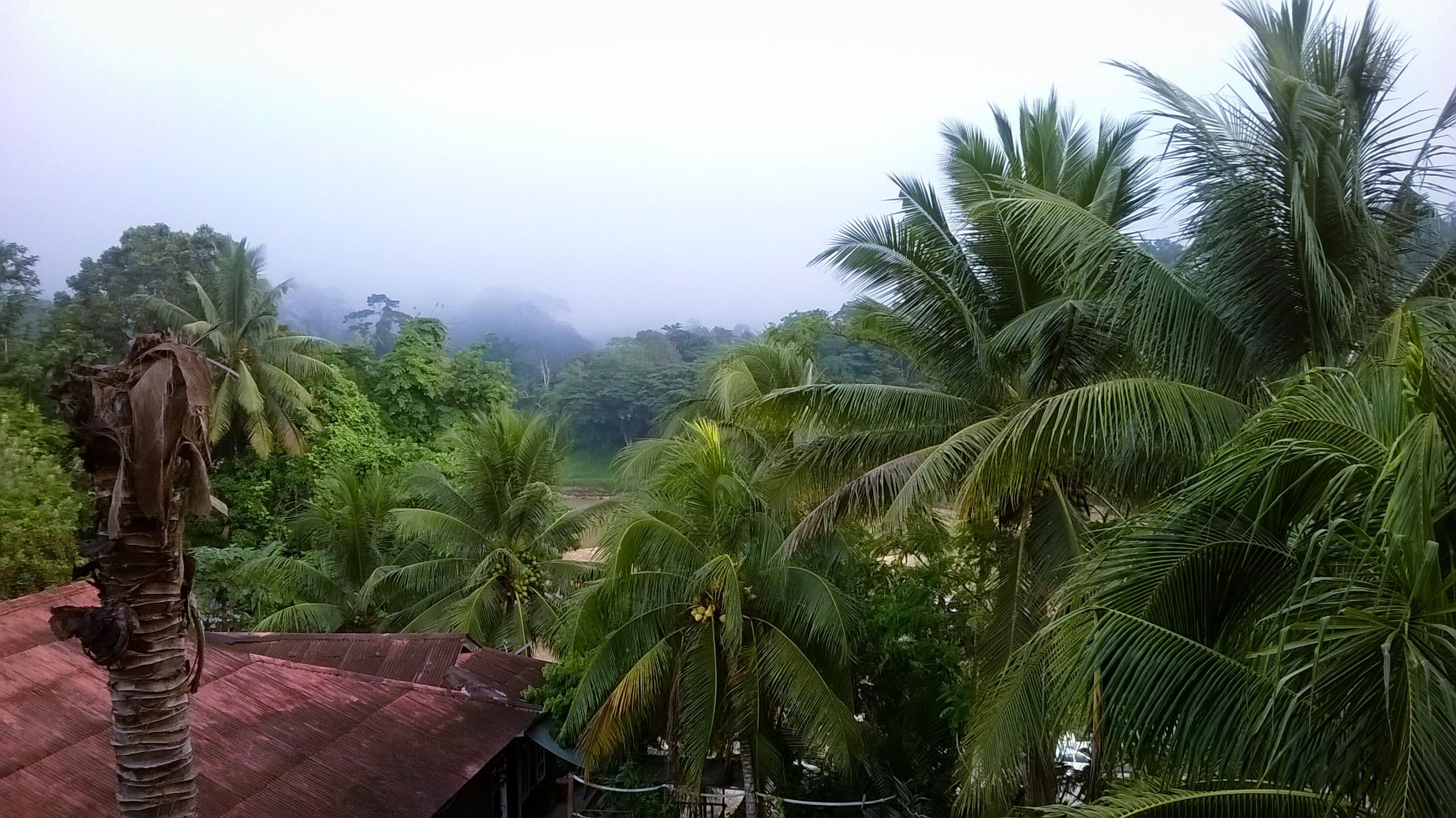 Image de la jungle du Taman negara