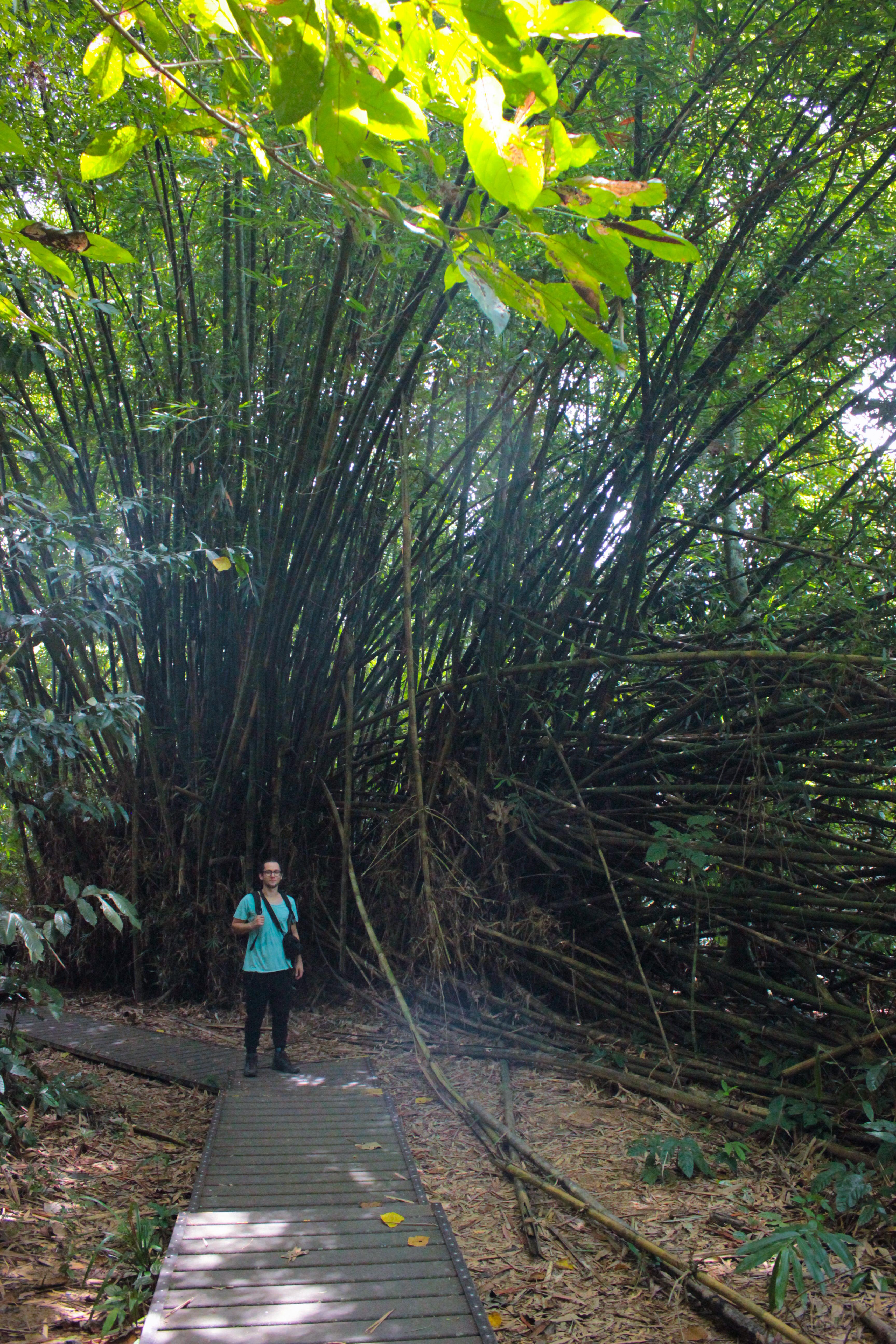 Image d'un homme dans la jungle du taman negara