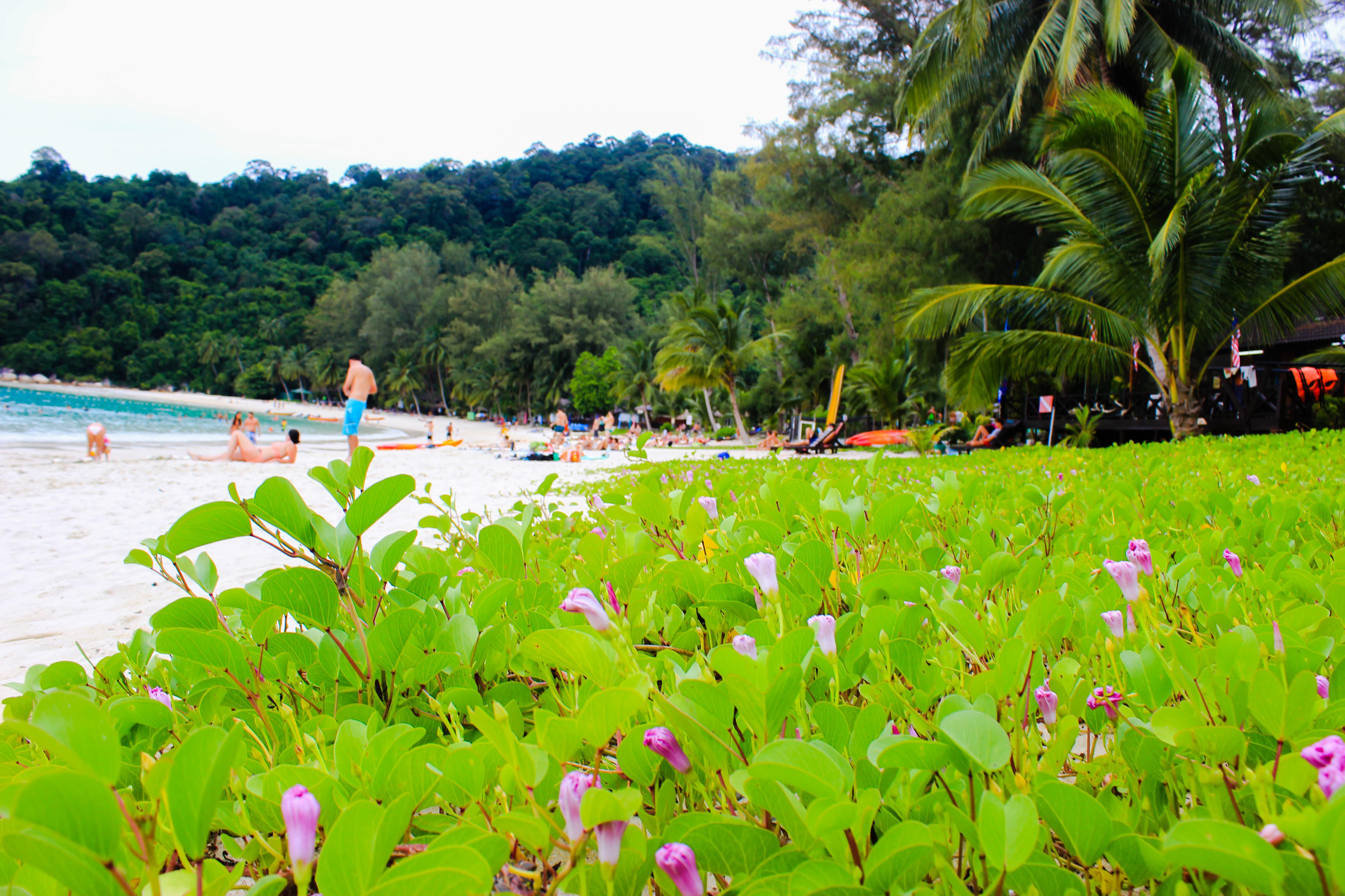 Image de fleurs sur la plage du Perhentian Island Resort