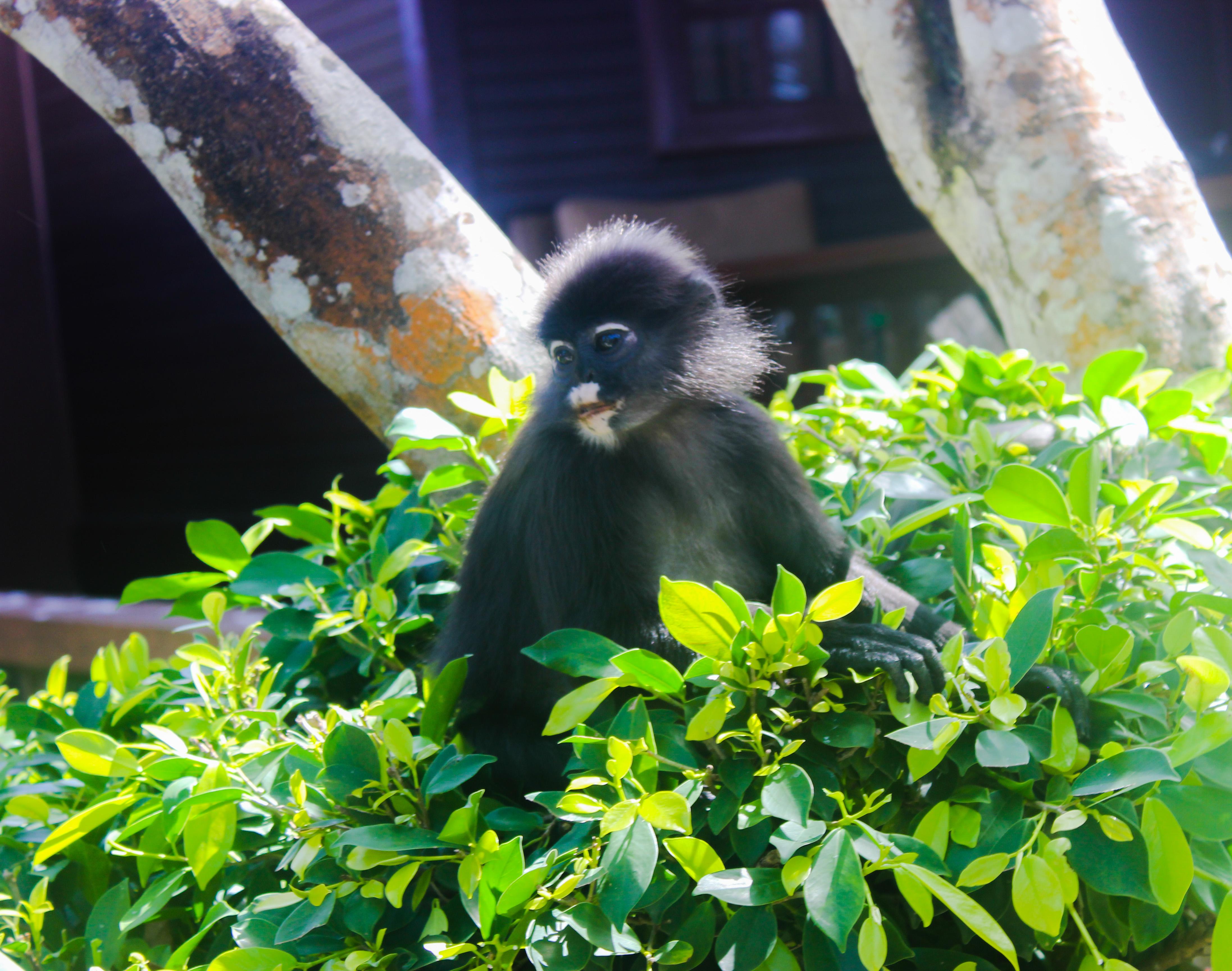 Image d'un singe au Coral View Island Resort