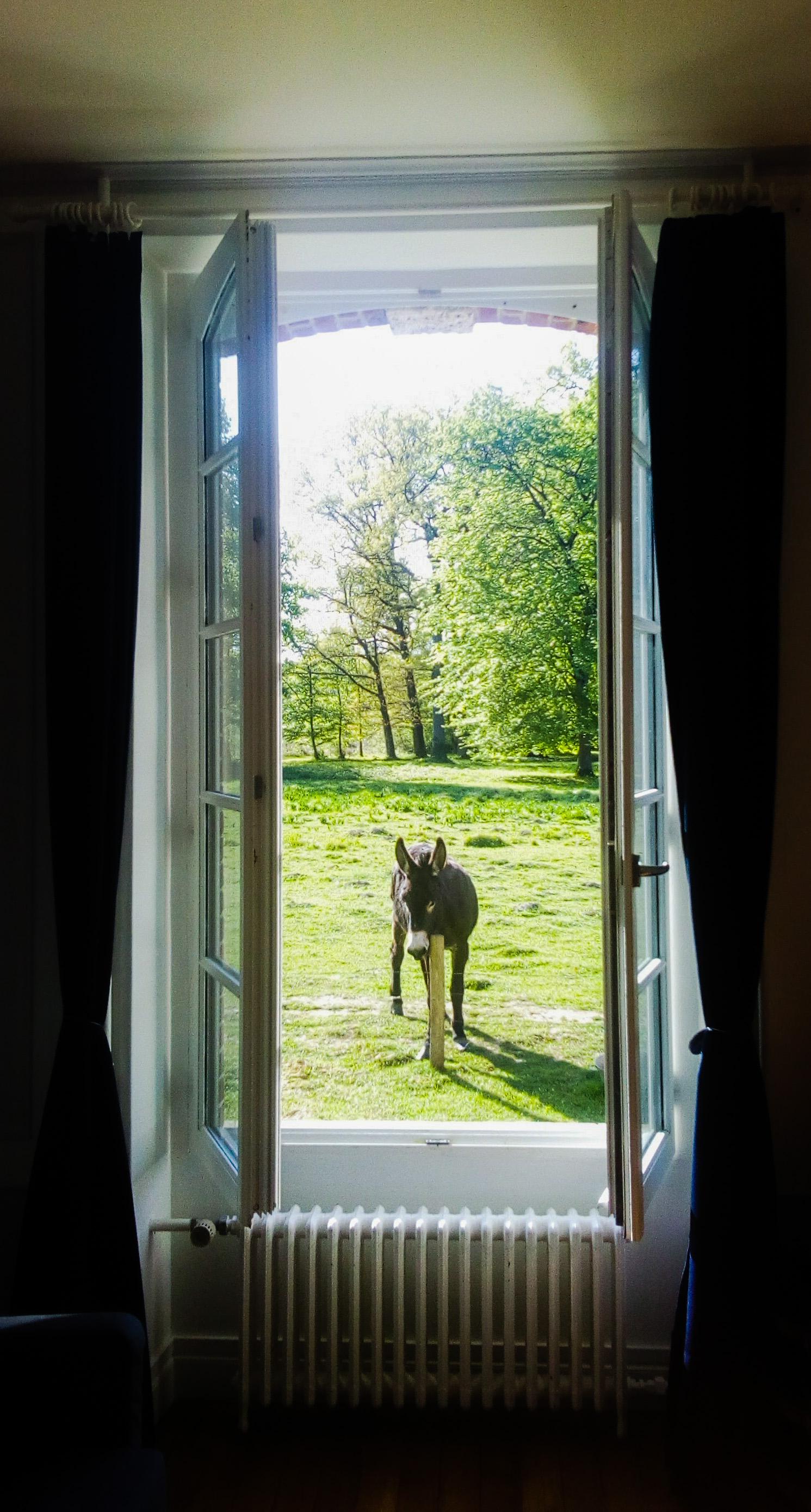 Image d'un âne devant la chambre au château de la Bourbelle