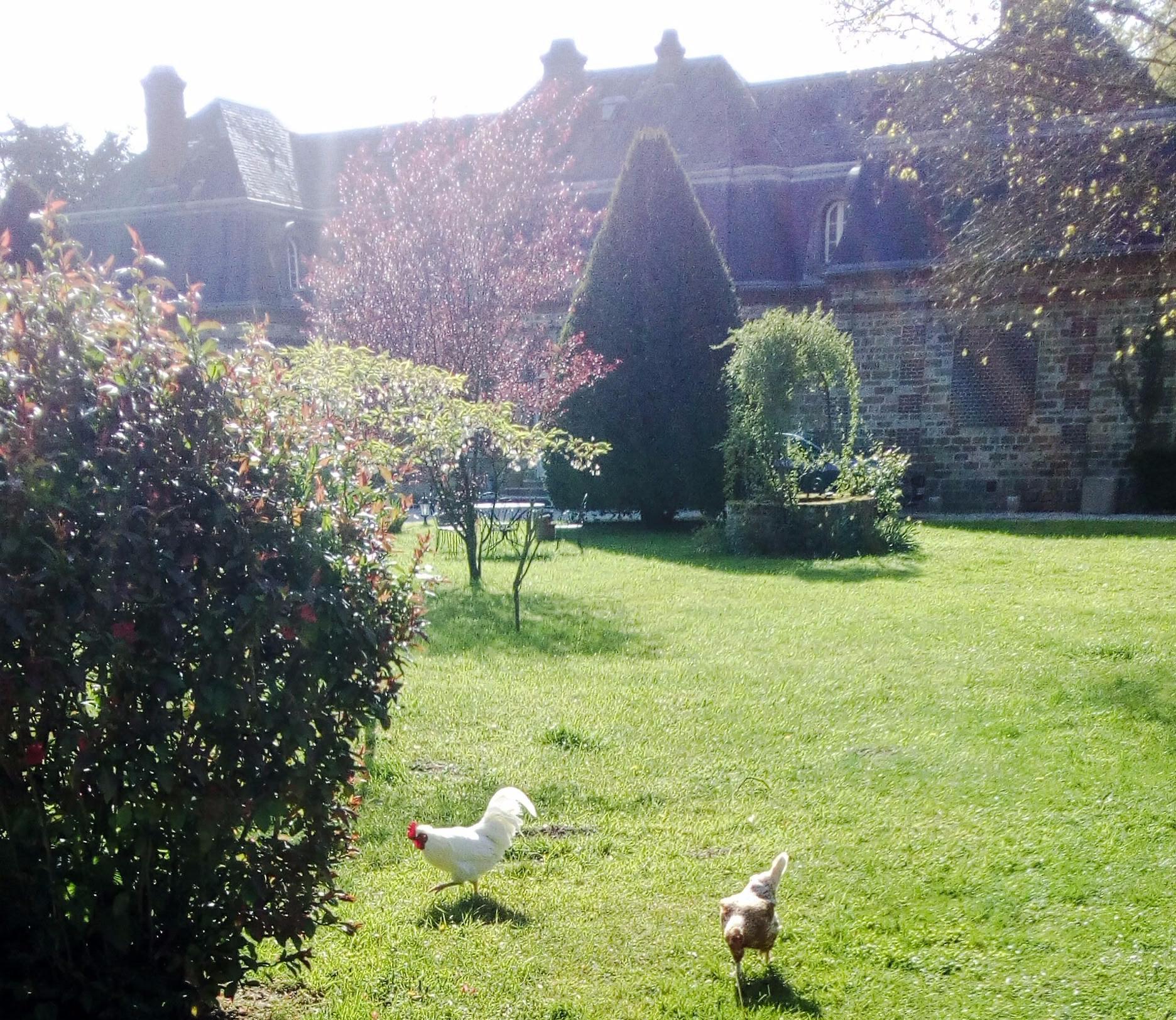 Image de poules devant le château de la Bourbelle
