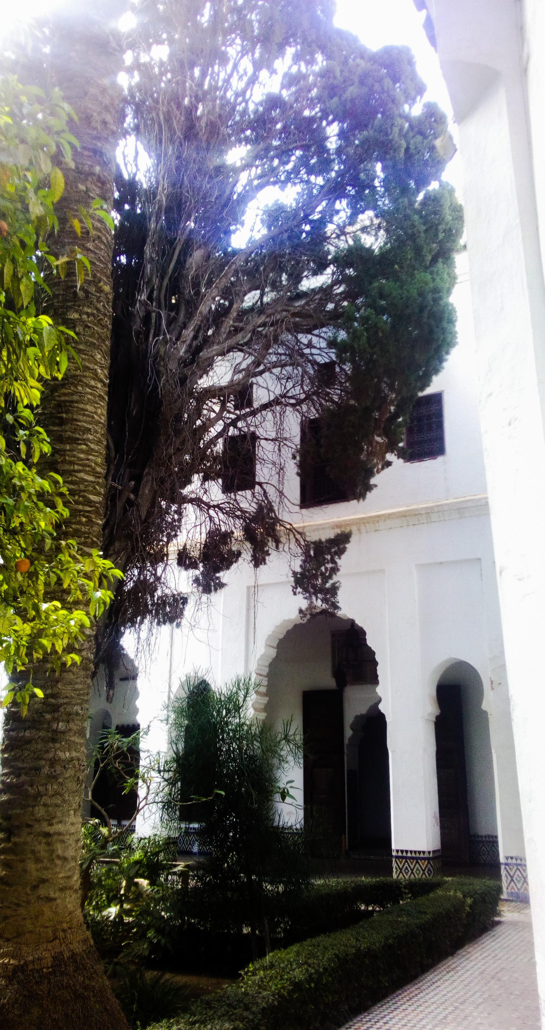 Image du jardin dans le musée Dar Jamai