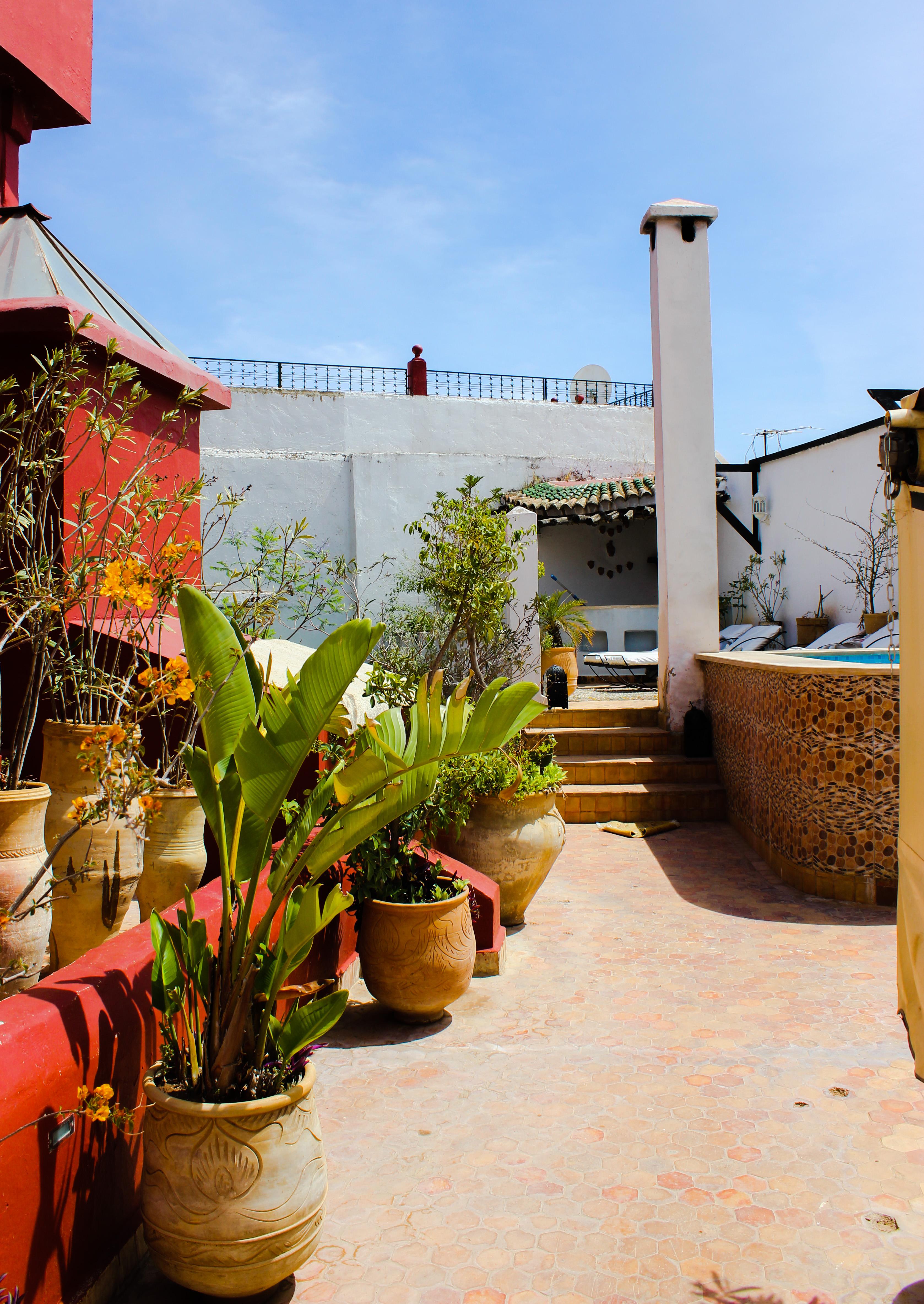 Plantes sur toit du riad d'or de Meknès